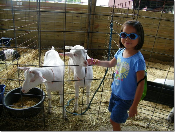 abby with goats