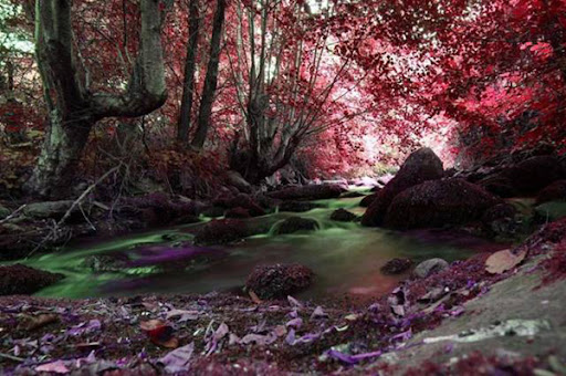34 wonderful examples of nature photography