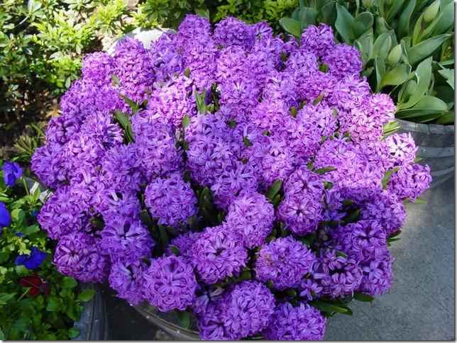 Kautzflowers 017