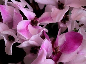 fiori-03