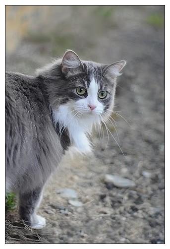 Première sortie dehors (chat) Elienretouche