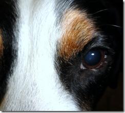 eye dutch