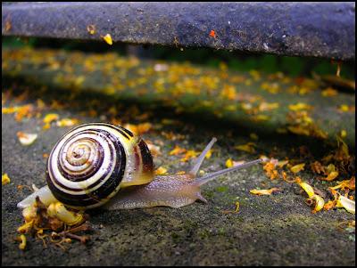 Escargot sur un mur