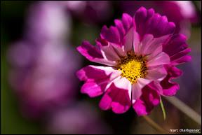 Jardins Secrets - Vaulx-14.jpg