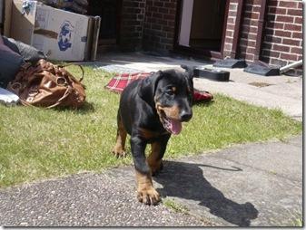 Jasper_Walking[1]