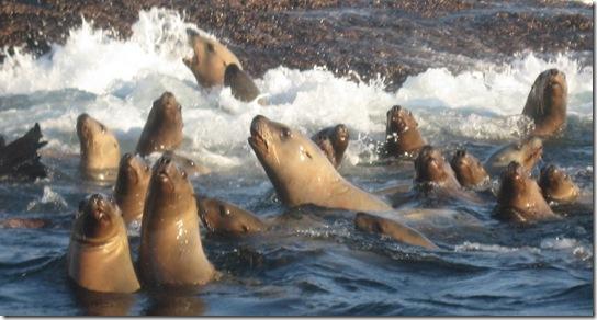 Seals 066