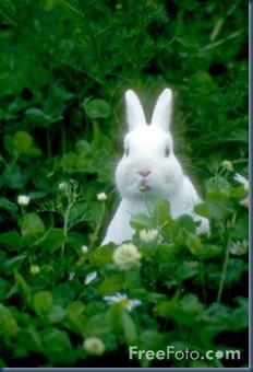 01_23_51---Rabbit_web