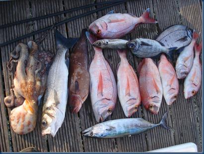 Pesca com JM