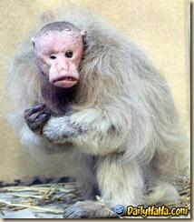 uglymonkey