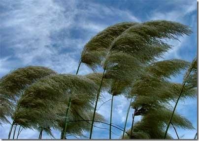 wind-blowing