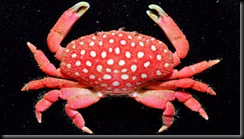 crab_2010_monster_397x224