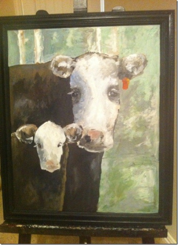amanda calf and cow
