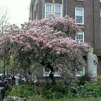 1104 Amsterdam