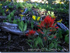 2009-05-21 #0066 - Paintbrush on Mt Jumbo