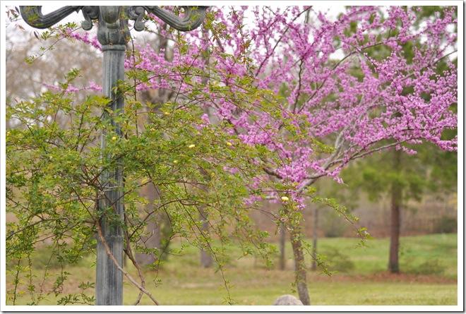 spring-2011 006