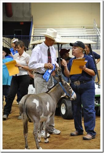 Donkey  show 283
