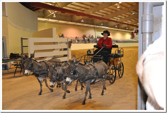 Donkey  show 308