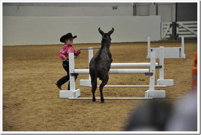 Donkey  show 150