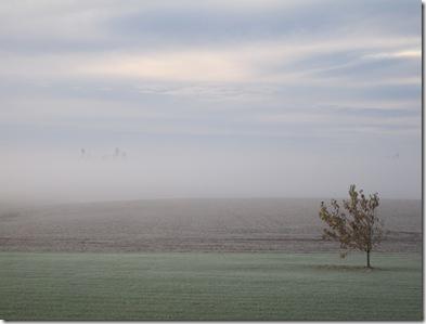 Foggy morn 10-27-09 (5)