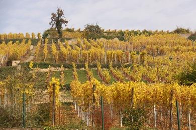 Alsace Oct 09 (243)