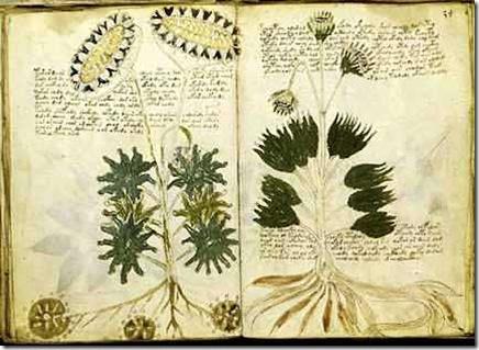 manuscrito-de-voynich