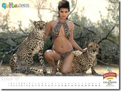Kingfisher Calendar 2011_11