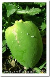 PapayafruitDSC01671(1)