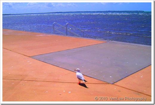 SeagullDSC00394(1)