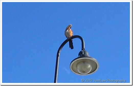 BirdLampIMG_0279(1)