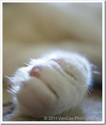 CatPawdsco1661