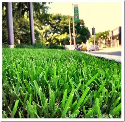 GrassP4220336
