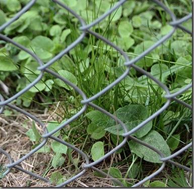 weeds 105