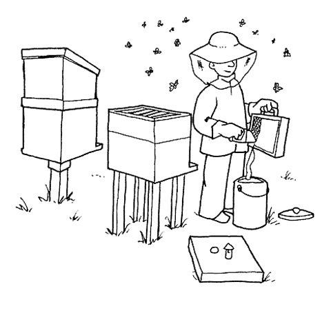 Dibujos de panal de abejas para colorear - Imagui