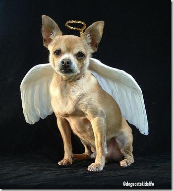 Dog-wings