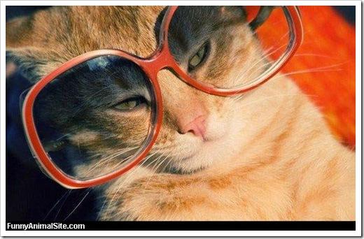 Sun_Glasses_Cat