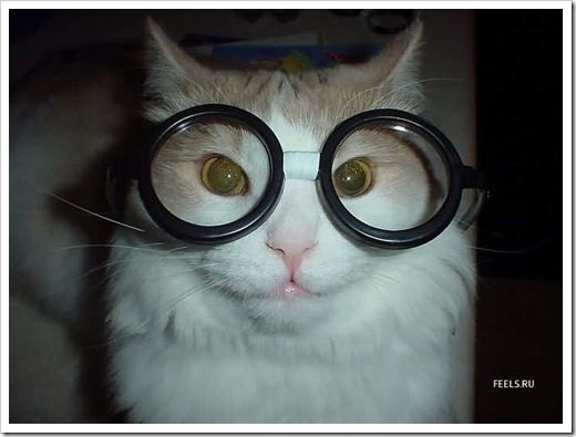 gatos- optimizado (119)