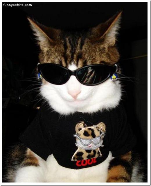 Cat_In_Sunglasses