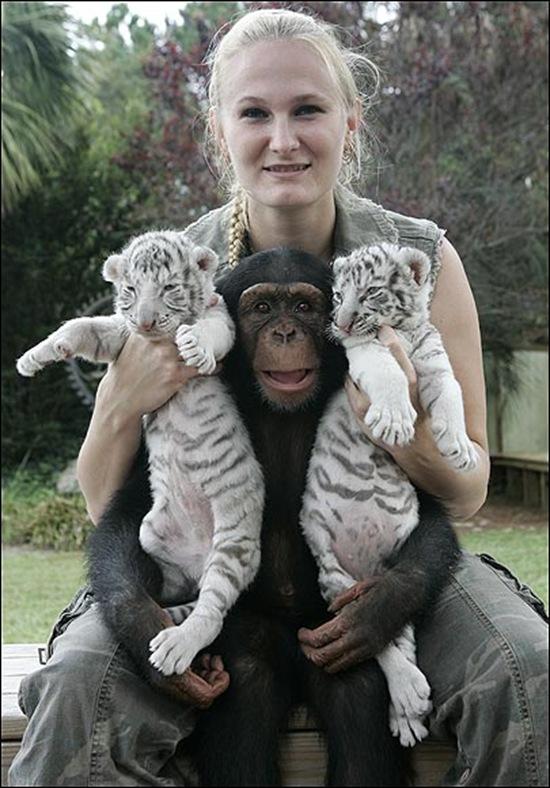 chimpance (5)