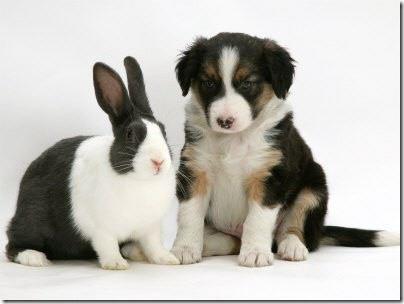 animales parecidos (2)