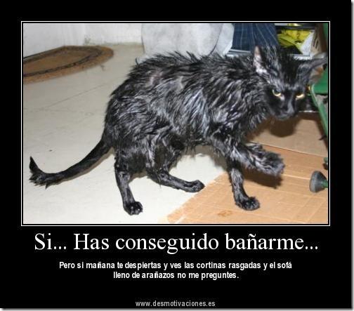 gato amenaza