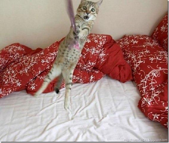 gatos migallinero (13)