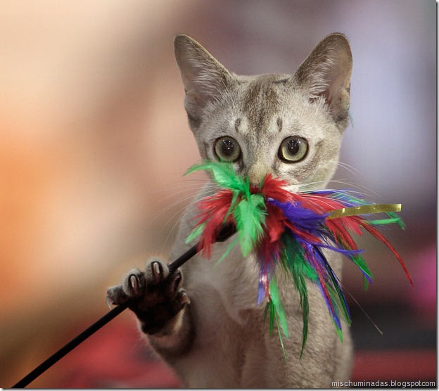 gatos migallinero (17)