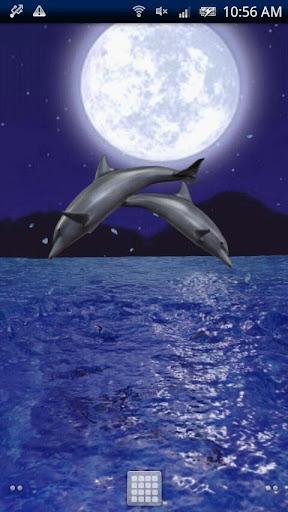 Dolphin Night Trial