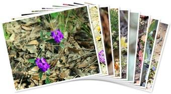 View WA Wildflowers 2009