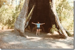 The biggest Giant Red Tingle tree