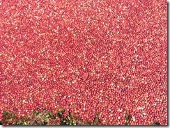 bog sea of red1
