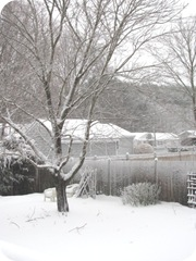 2010 snowstorm6