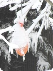 1.27.11 snowstorm erosion bundle1