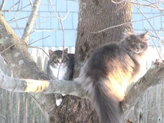 2.12.11 fluffpuff and stray kitty in tree