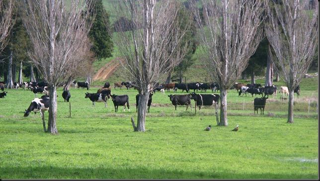 herd8May2011